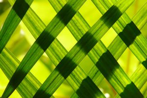 grassprietjes tegen het licht