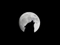 Het ritme van de maan